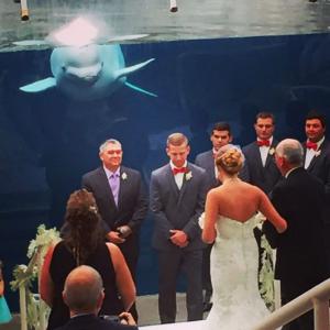 Mystic Aquarium Espresso Dave whale watch wedding